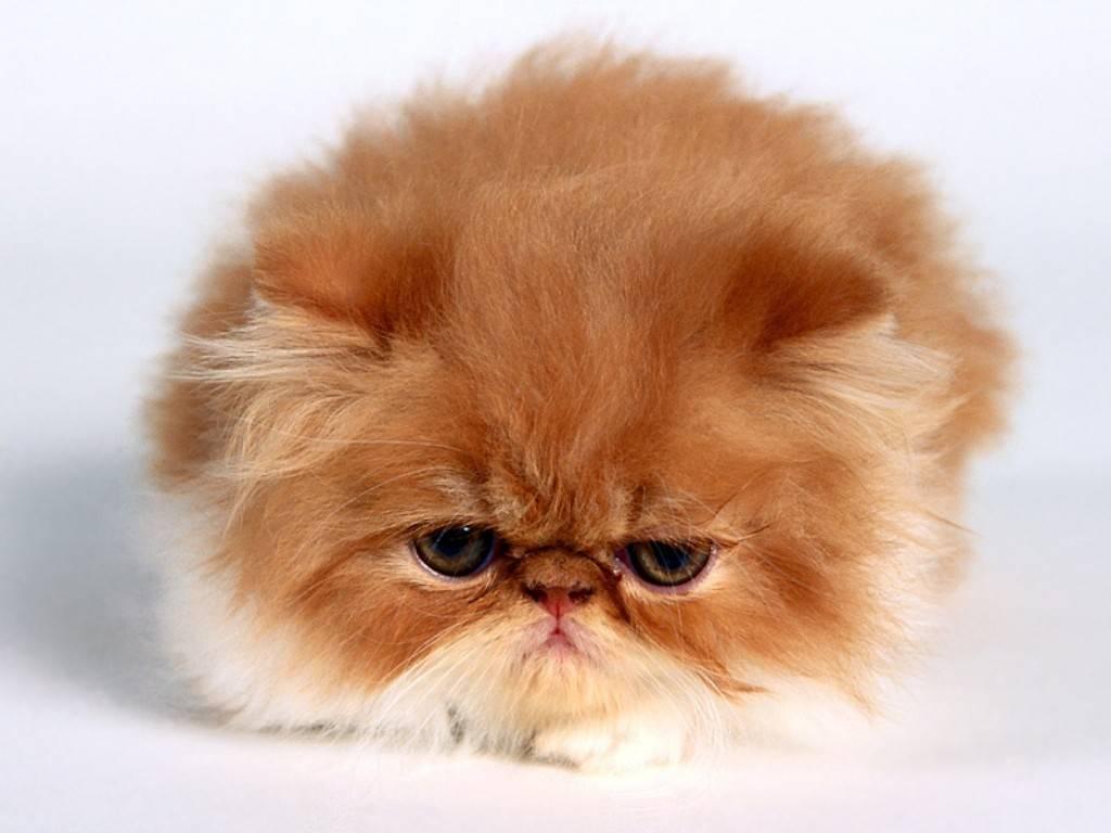 http://ter-paling.blogspot.com/2012/02/fakta-fakta-mengenai-kucing.html